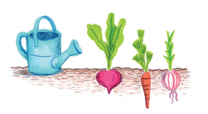Illustration of some planted veggies next to a watering can.