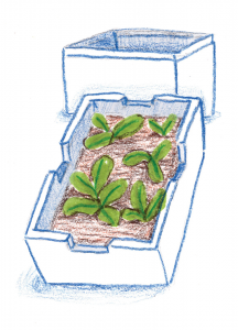 Illustration of plants in a reused box.