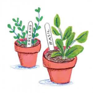 Illustration of some potted basil and rosemary.